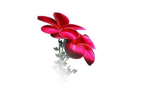 wallpaper flower png photoshop png frames wallpapers designs flowers 2