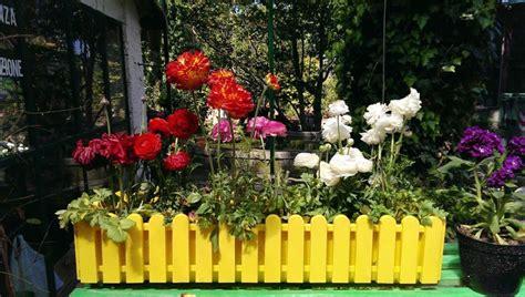 vendita di fiori e piante a sorrento vivaio ruoppo