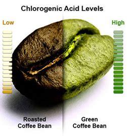 l acido clorogenico in quali alimenti si trova acido clorogenico effetti collaterali ed effetti