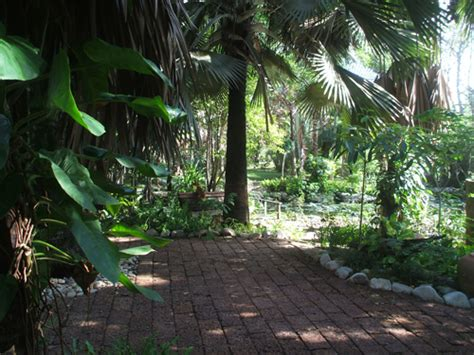 plants that grow in tropical climates tips for gardening and growing plants in thailand thai