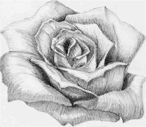 dibujos realistas a lapiz de flores dibujos de flores para dibujar a lapiz buscar con google