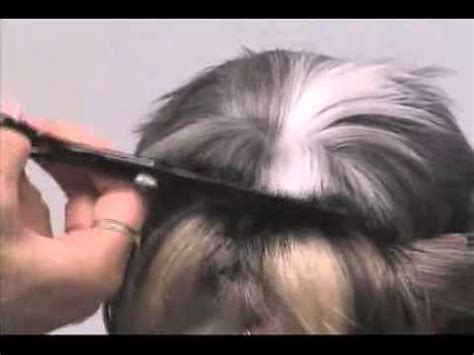hair cut for maltese around the super styling session shih tzu grooming tips youtube