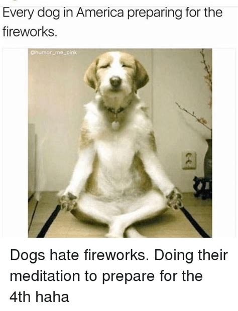preparing for a puppy every in america preparing for the fireworks dogs fireworks doing their