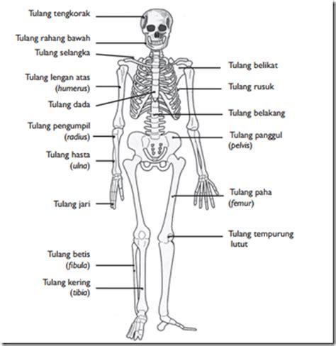 fungsi rangka bagi tubuh manusia garda pengetahuan