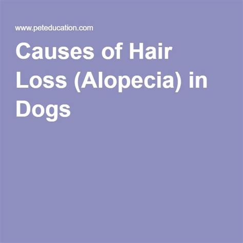 home remedys for dogs losing hair 10 best ideas about hair loss in dogs on pinterest dog