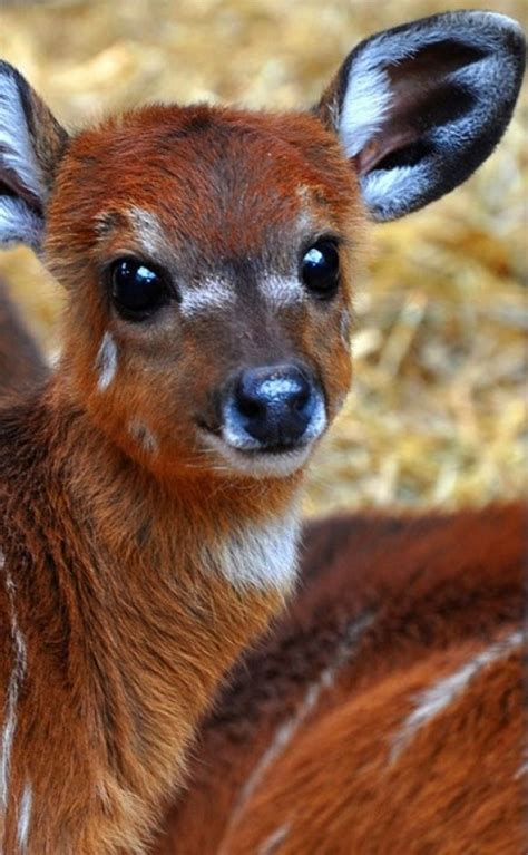 baby deer bunnies kitties puppies cutness pinterest baby deer animal  animal pics