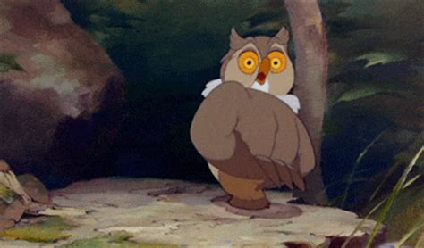 film cartoon owl bambi animated gifs gifmania