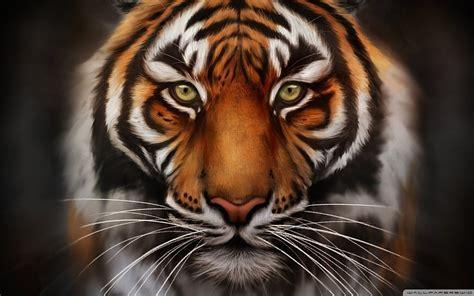 imagenes fondo de pantalla tigre salvar al tigre fondo de pantalla 1920x1080 fondos de