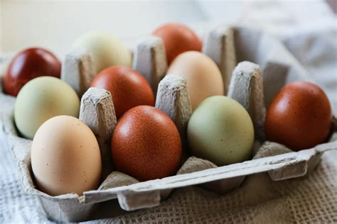 do chickens lay colored eggs a who s who of colorful egg laying chickens modern farmer