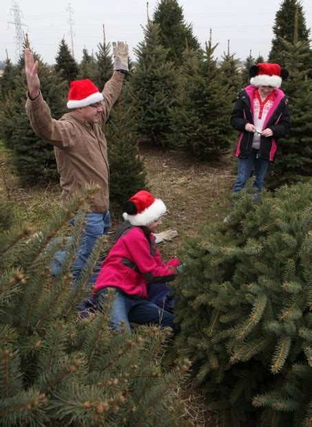 christmas tree farms offer holiday spirit tradition
