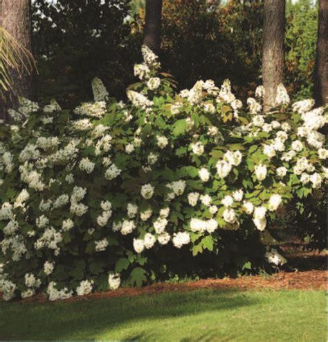 Aldridge Botanical Gardens 7 Alabama Stops Where Reigns Year