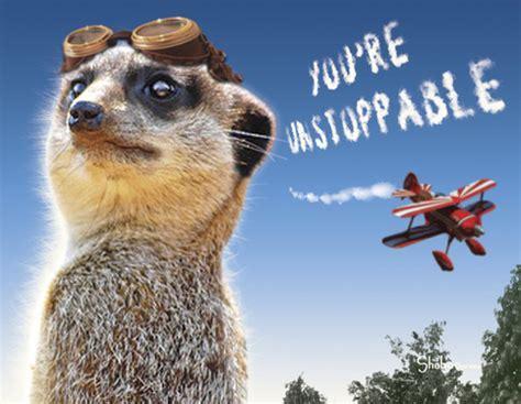 Funny Meerkat Aviator Encouragement Card: Unstoppable on