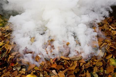 burn leaves in backyard burning fall leaves may be hazardous to your health