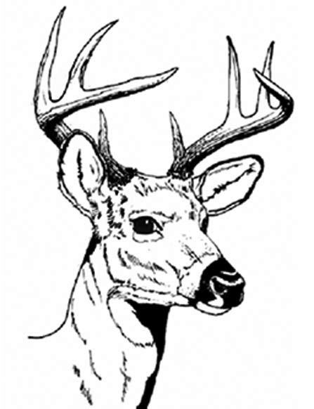 deer head line drawing clipart best