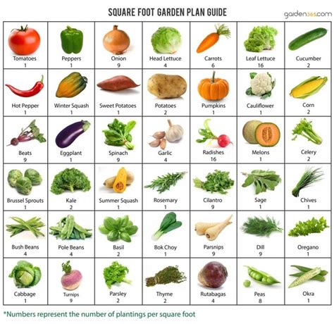 Galerry printable companion planting guide