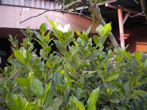 cara membuat rumah harum alami tips membuat rumah harum alami dengan sentuhan guraruguraru