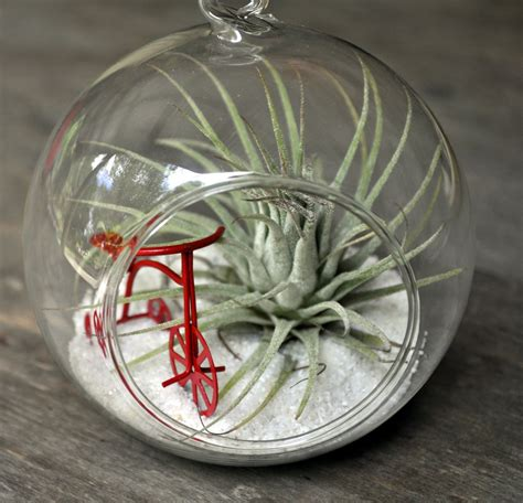 top 28 air plant design easy way to customize an air