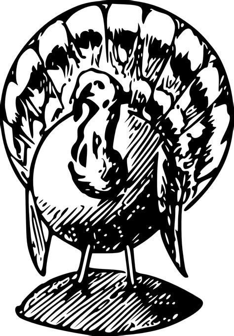 turkey line art clipart best turkey clip art black and white clipart best