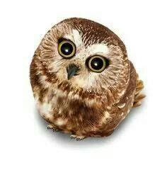 libro owl babies 1000 images about owls are funny birds on bath body works mo farah and snow