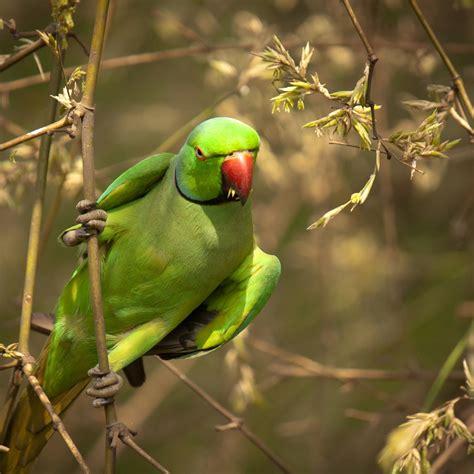 Wallpaper Of Green Parrot | wallpaperswide9 blogspot com free hd desktop wallpapers