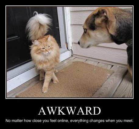 25 Funny Dog And Cat Demotivational Signs   CatTime