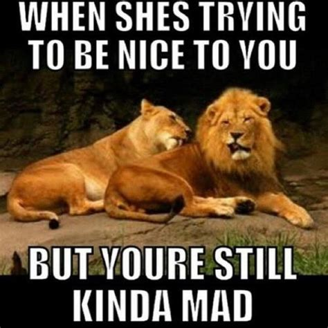 U Still Mad Meme - 50 very funny lion meme pictures and images