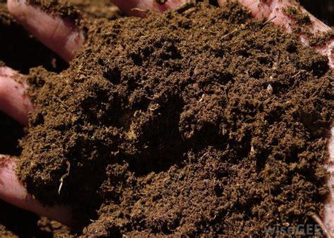 peat moss 2 litre geckodan danny brown