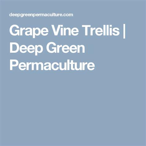 grape vine trellis grape vine trellis dig gardens