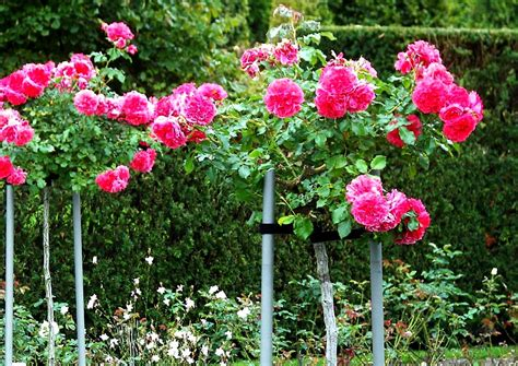 blumengarten gestalten mit den garten gestalten 10 ideen