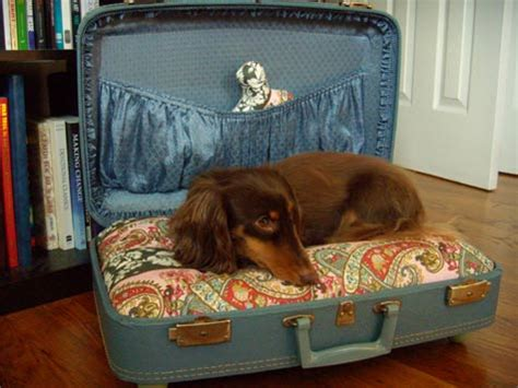 suitcase dog bed 2008 diy winners 1st place design sponge
