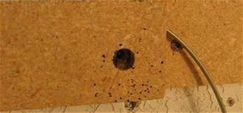 how to spot bed bugs are there bedbugs in your library books here s how to