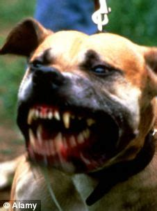 vicious barking dogs who bite aren t barking mad they re just depressed daily mail