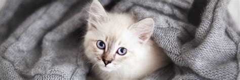 puppy adoption events near me 50 baby kittens for adoption near me kittens wallpapers