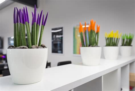 indoor office plants office plant hire service inleaf