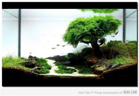 Freshwater Aquascaping Housed In Glass Pinterest