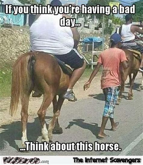 Having A Bad Day Meme - horse humour page 2 forums at psych central