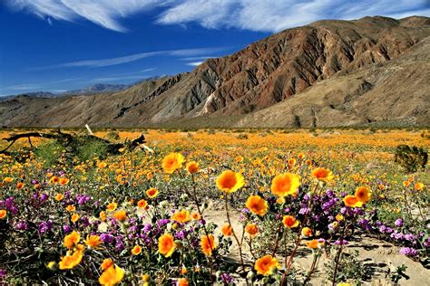 where is anza borrego anza borrego desert state park 8 reasons to visit now ync
