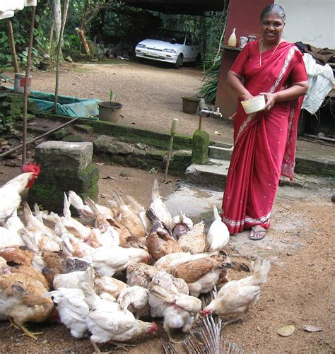 backyard poultry farming in india mrs kumariamma card krishi vigyan kendra pathanamthitta