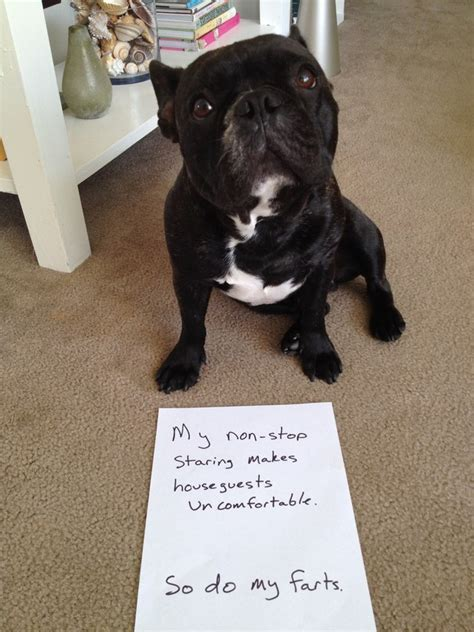 puppy shaming best of shaming