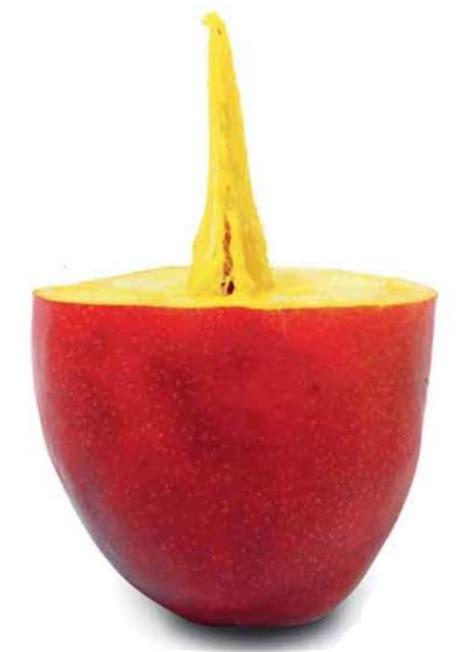 Tanaman Buah Mangga Yuwen jual bibit buah mangga yu wen bibitbunga