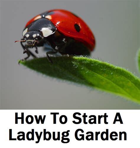 how to start a flower garden in your backyard how to start a ladybug garden flowers uae