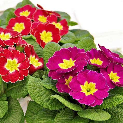 fiori stagionali sementi fiori stagionali da interno ed esterno per il tuo