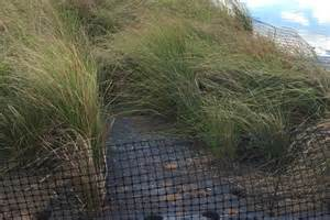 grass mattresses used at sewerage treatment plant to help