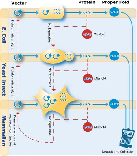 protein expression protein expression