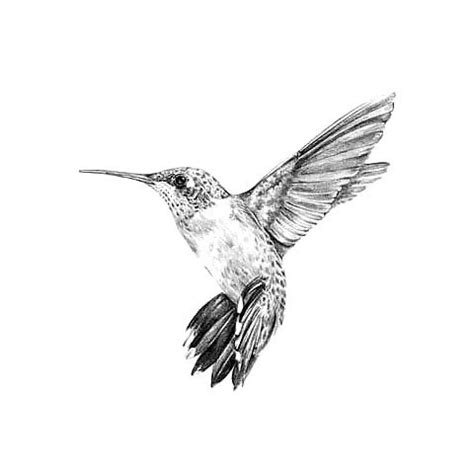 black and white hummingbird tattoo designs black and gray hummingbird design