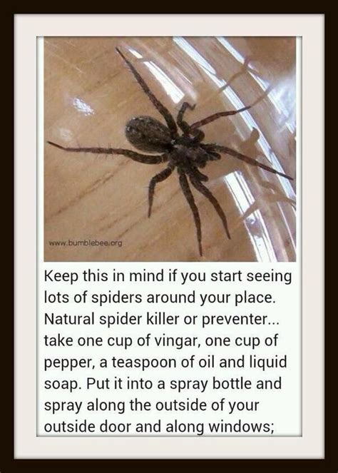 use peppermint to get rid of spiders and mice trusper