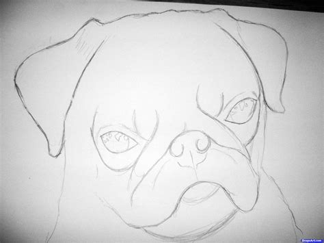 step by step how to draw a pug how to draw a realistic pug step by step pets animals free drawing tutorial