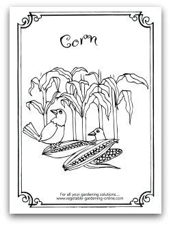 herb garden coloring pages herb garden coloring page free vegetable garden coloring