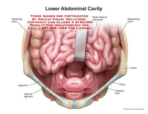 uterus bladder diagram uterus bladder diagram 28 images human anatomy bladder