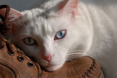 how to euthanize a with sleeping pills cat euthanasia putting your cat to sleep decisions to make